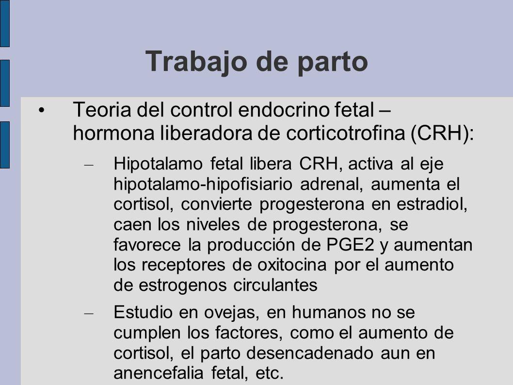 Trabajo de parto Teoria del control endocrino fetal – hormona liberadora de corticotrofina (CRH):