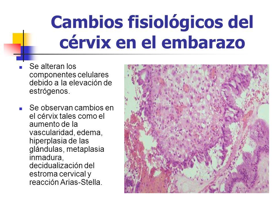 Cambios fisiológicos del cérvix en el embarazo