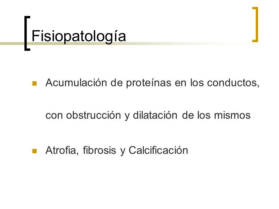 Fisiopatología Acumulación de proteínas en los conductos, con obstrucción y dilatación de los mismos.