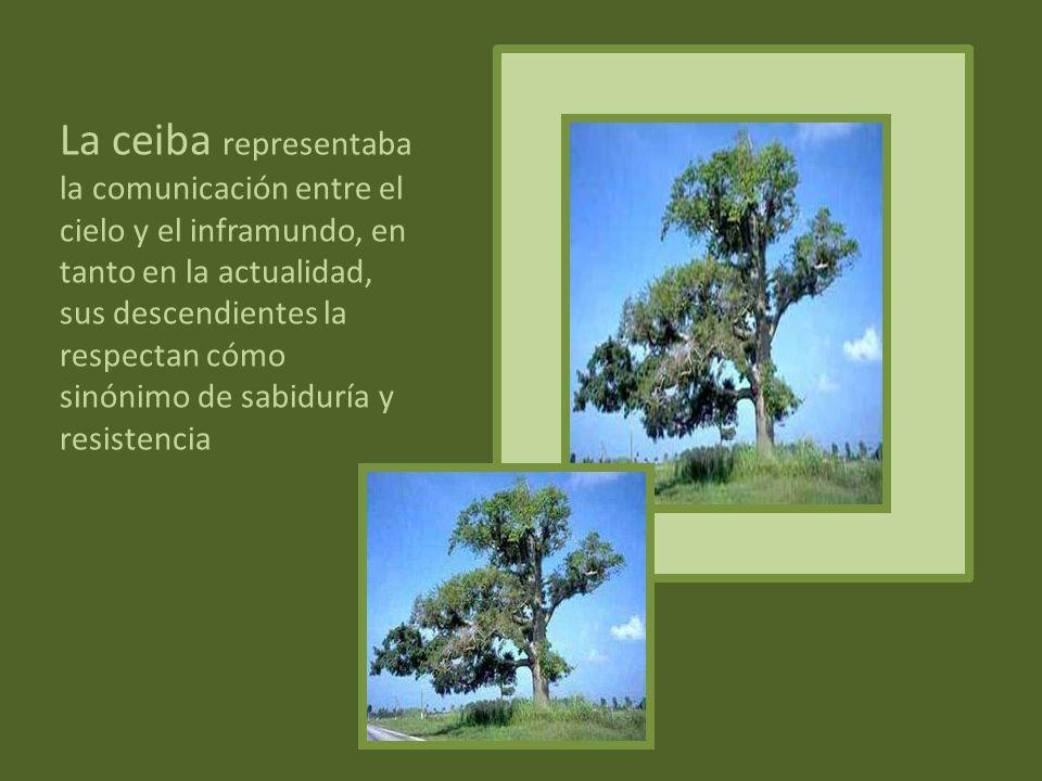 La ceiba representaba la comunicación entre el cielo y el inframundo, en tanto en la actualidad, sus descendientes la respectan cómo sinónimo de sabiduría y resistencia