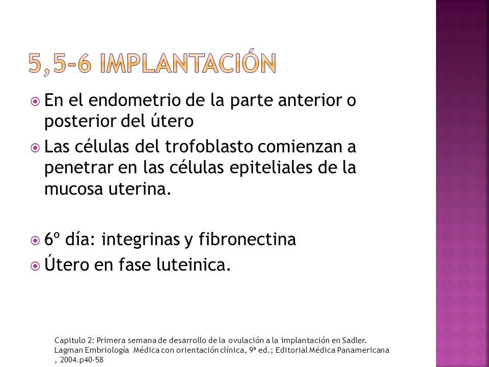 5,5-6 implantación En el endometrio de la parte anterior o posterior del útero.