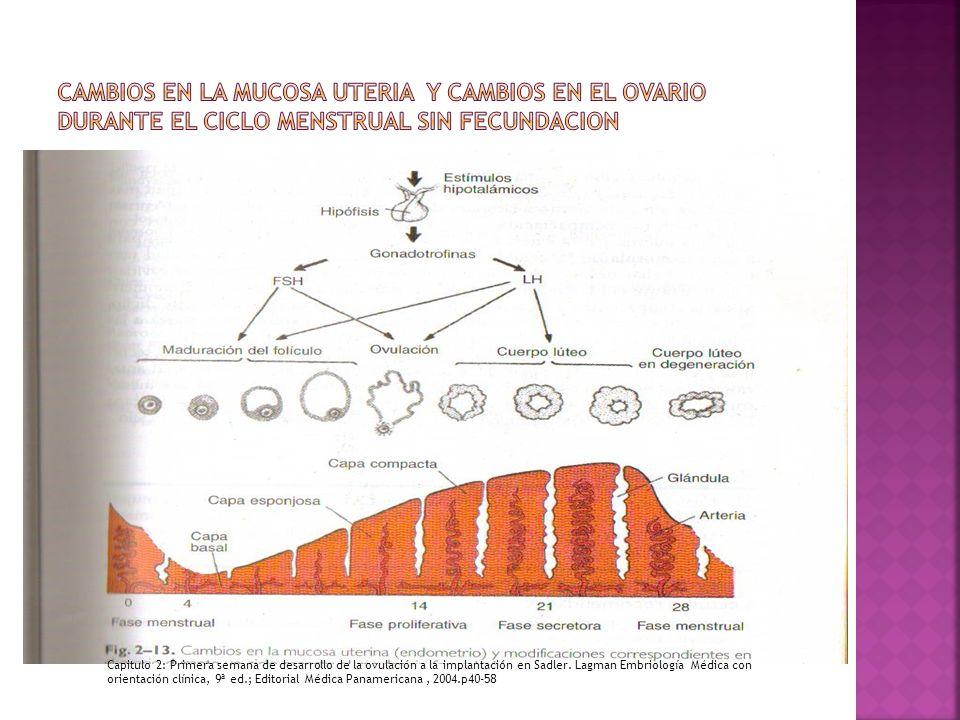 Cambios en la mucosa uteria y cambios en el ovario durante el ciclo menstrual sin fecundacion