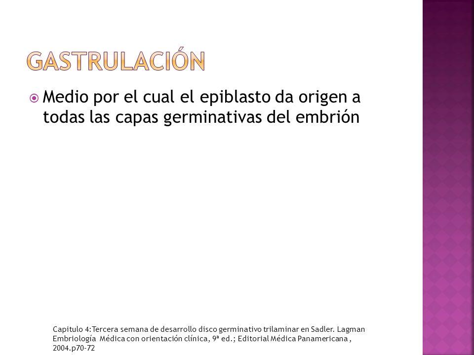 gastrulación Medio por el cual el epiblasto da origen a todas las capas germinativas del embrión.