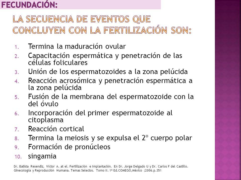 La secuencia de eventos que concluyen con la fertilización son: