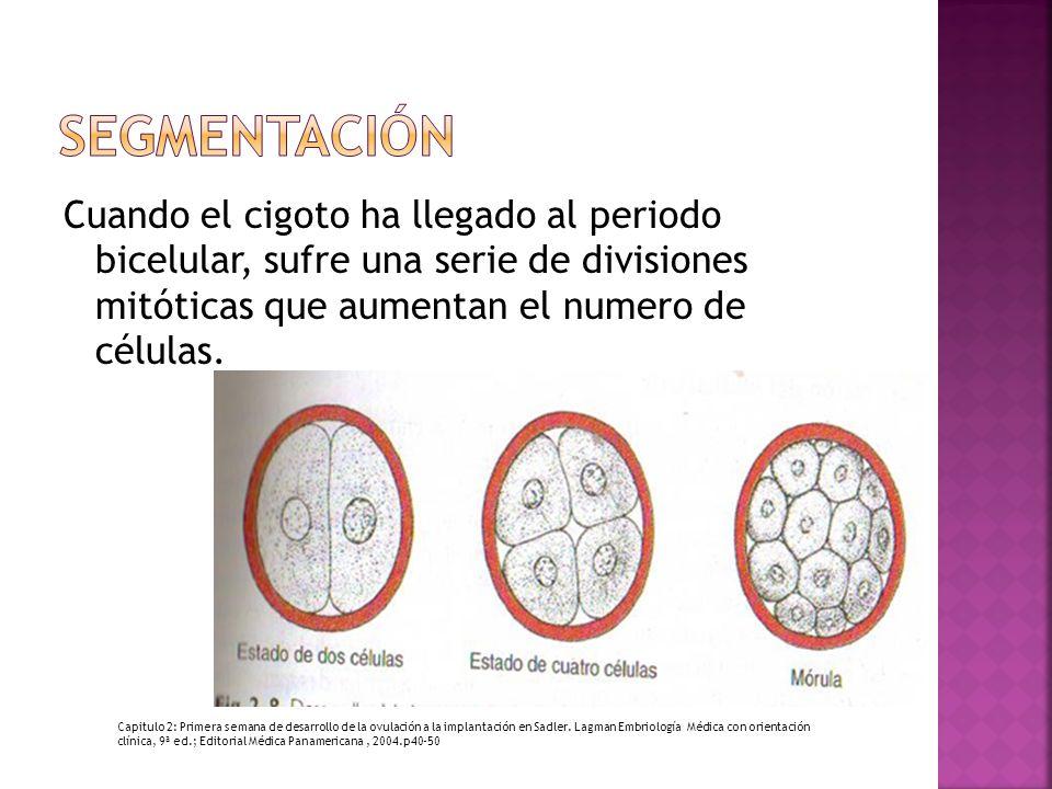 segmentación Cuando el cigoto ha llegado al periodo bicelular, sufre una serie de divisiones mitóticas que aumentan el numero de células.