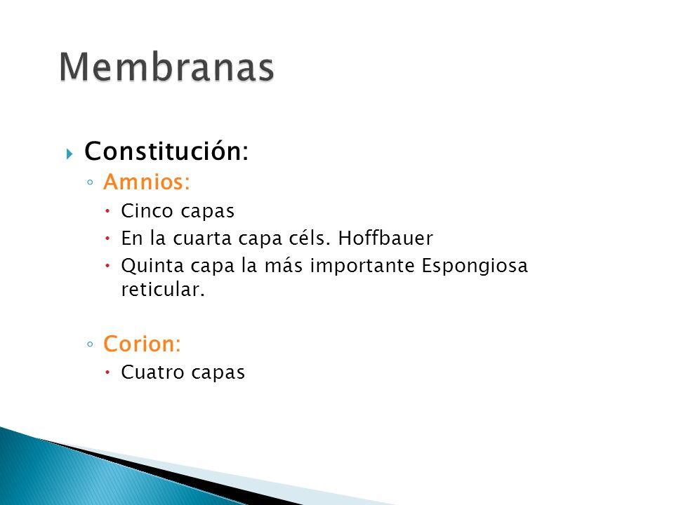 Membranas Constitución: Amnios: Corion: Cinco capas