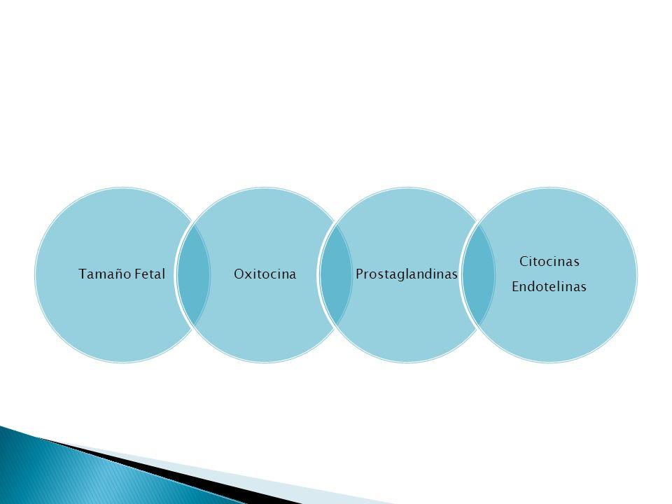 Tamaño Fetal Oxitocina Prostaglandinas Endotelinas Citocinas