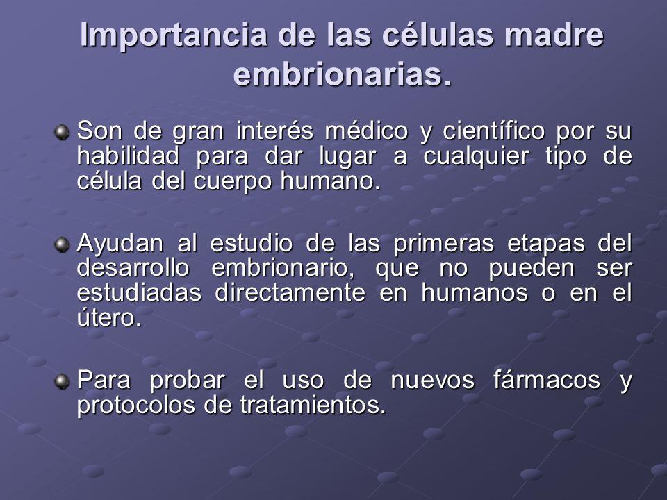 Importancia de las células madre embrionarias.