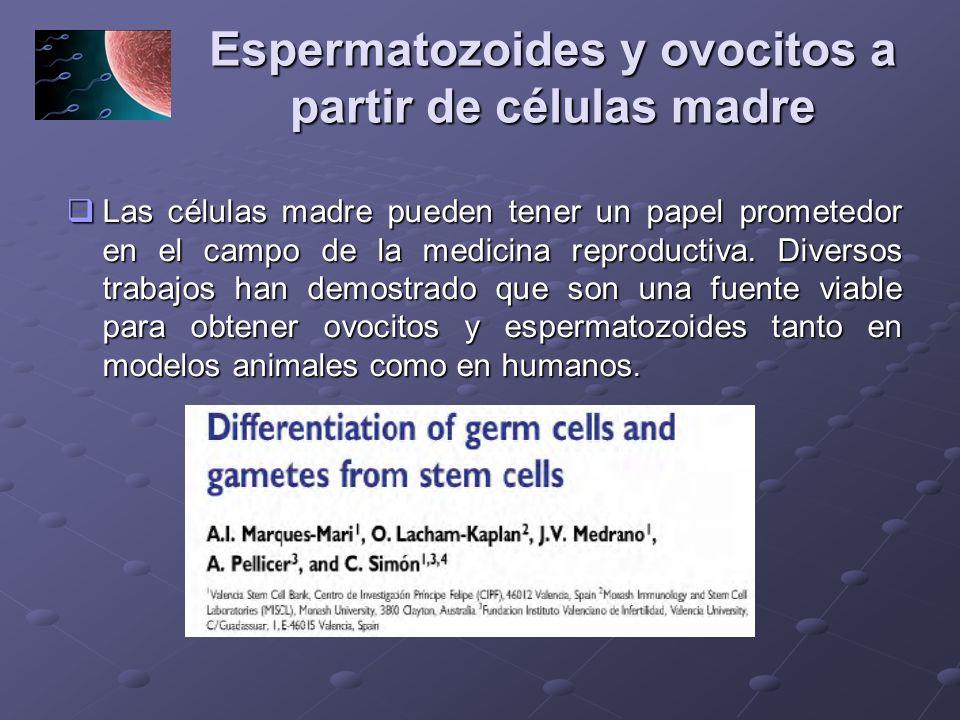 Espermatozoides y ovocitos a partir de células madre