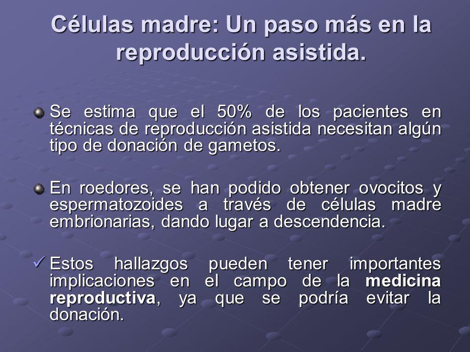 Células madre: Un paso más en la reproducción asistida.