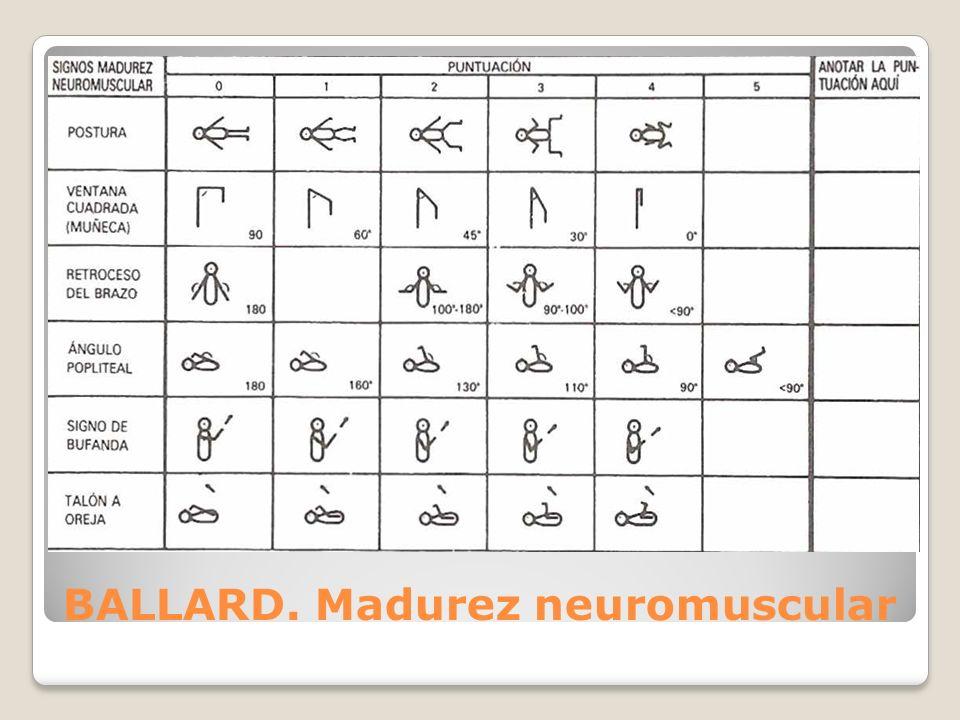 BALLARD. Madurez neuromuscular