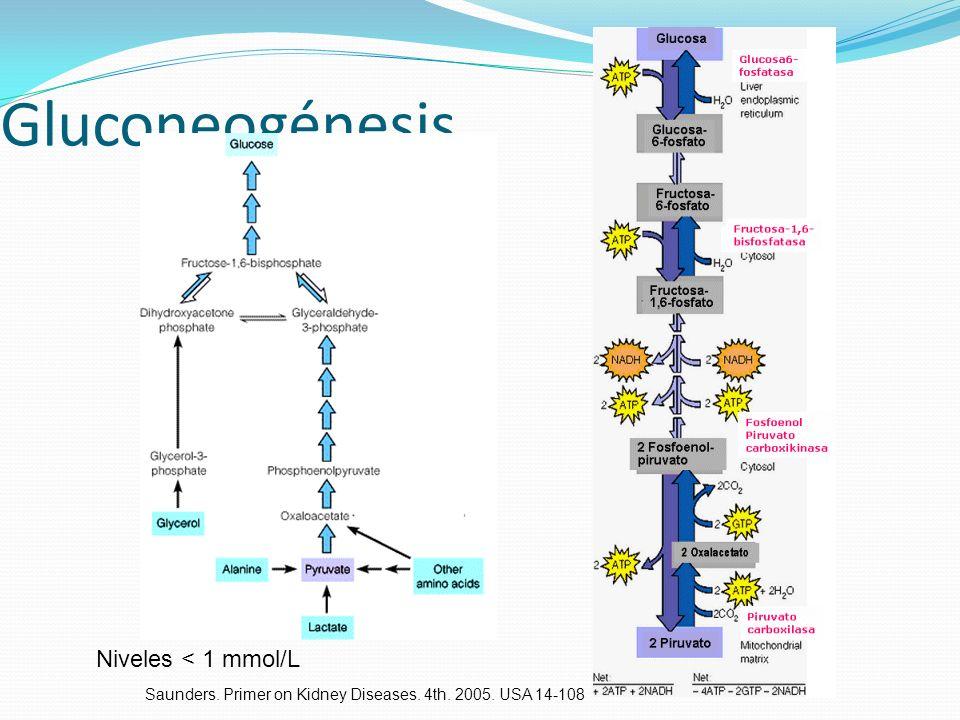 Gluconeogénesis Niveles < 1 mmol/L