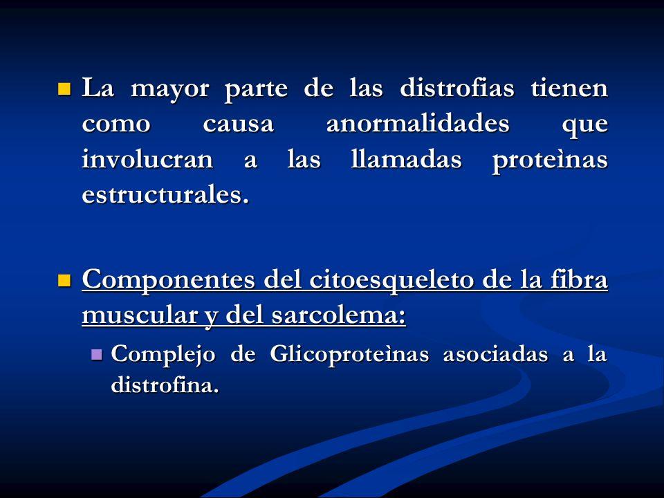 Componentes del citoesqueleto de la fibra muscular y del sarcolema: