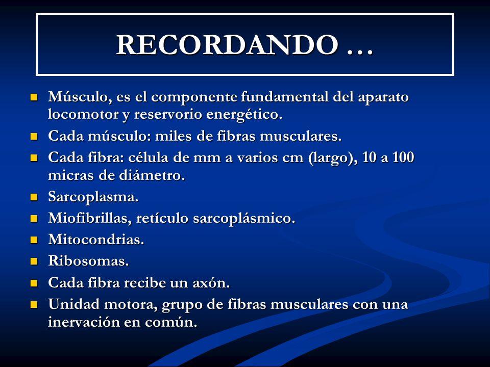 RECORDANDO … Músculo, es el componente fundamental del aparato locomotor y reservorio energético. Cada músculo: miles de fibras musculares.