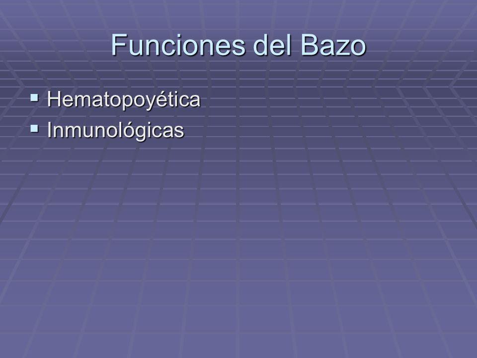 Funciones del Bazo Hematopoyética Inmunológicas