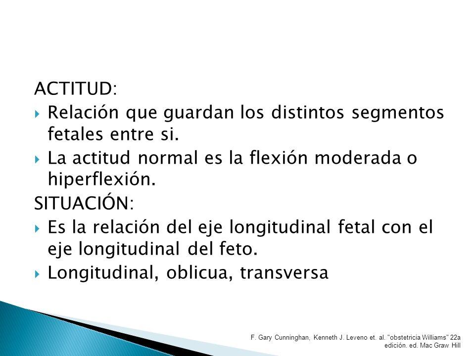 Relación que guardan los distintos segmentos fetales entre si.