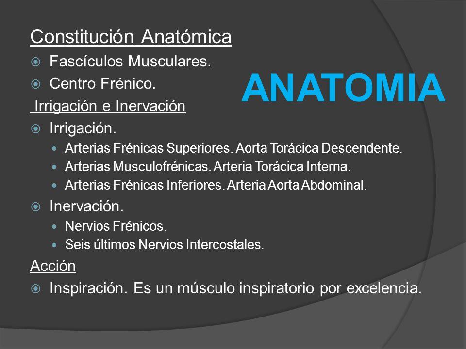 ANATOMIA Constitución Anatómica Fascículos Musculares. Centro Frénico.