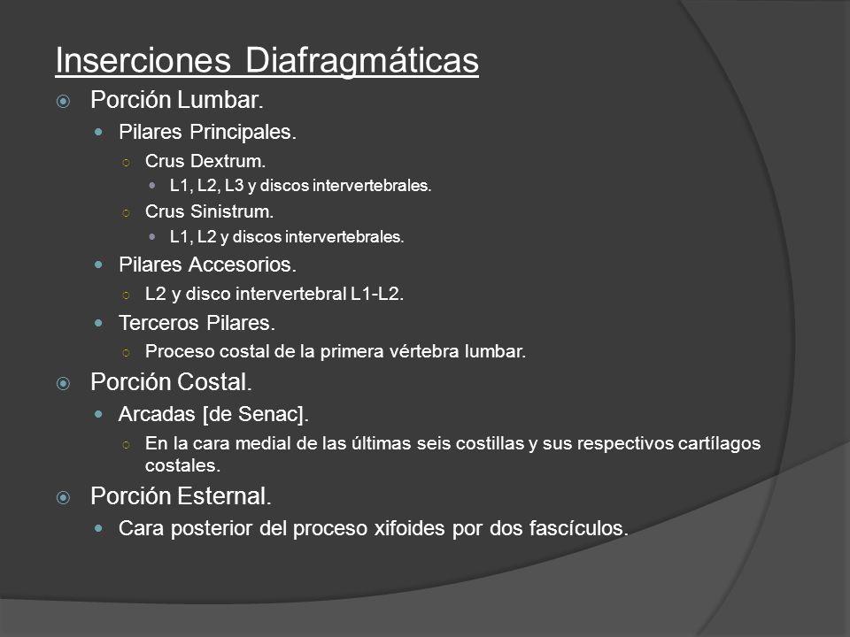 Inserciones Diafragmáticas