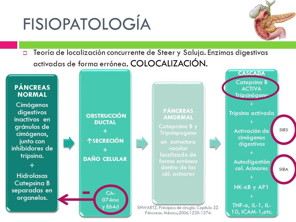 FISIOPATOLOGÍA Teoría de localización concurrente de Steer y Saluja. Enzimas digestivas activadas de forma errónea. COLOCALIZACIÓN.