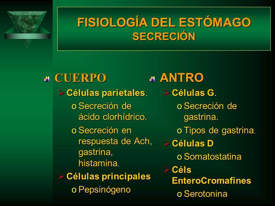 FISIOLOGÍA DEL ESTÓMAGO SECRECIÓN