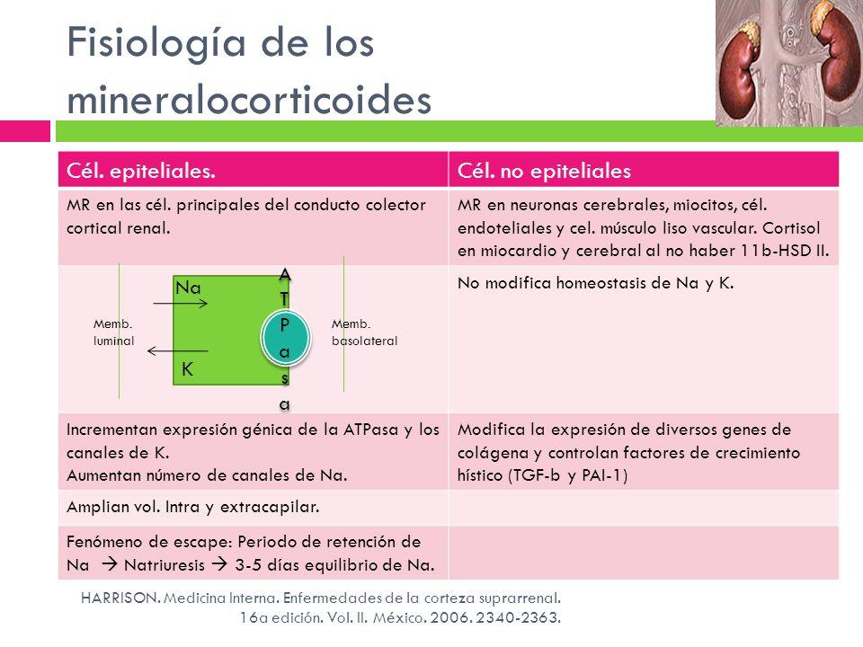 Fisiología de los mineralocorticoides