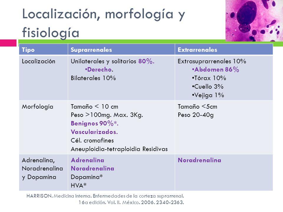 Localización, morfología y fisiología