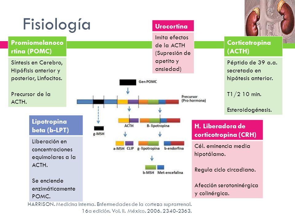 Fisiología Urocortina Promiomelanocortina (POMC) Corticotropina (ACTH)