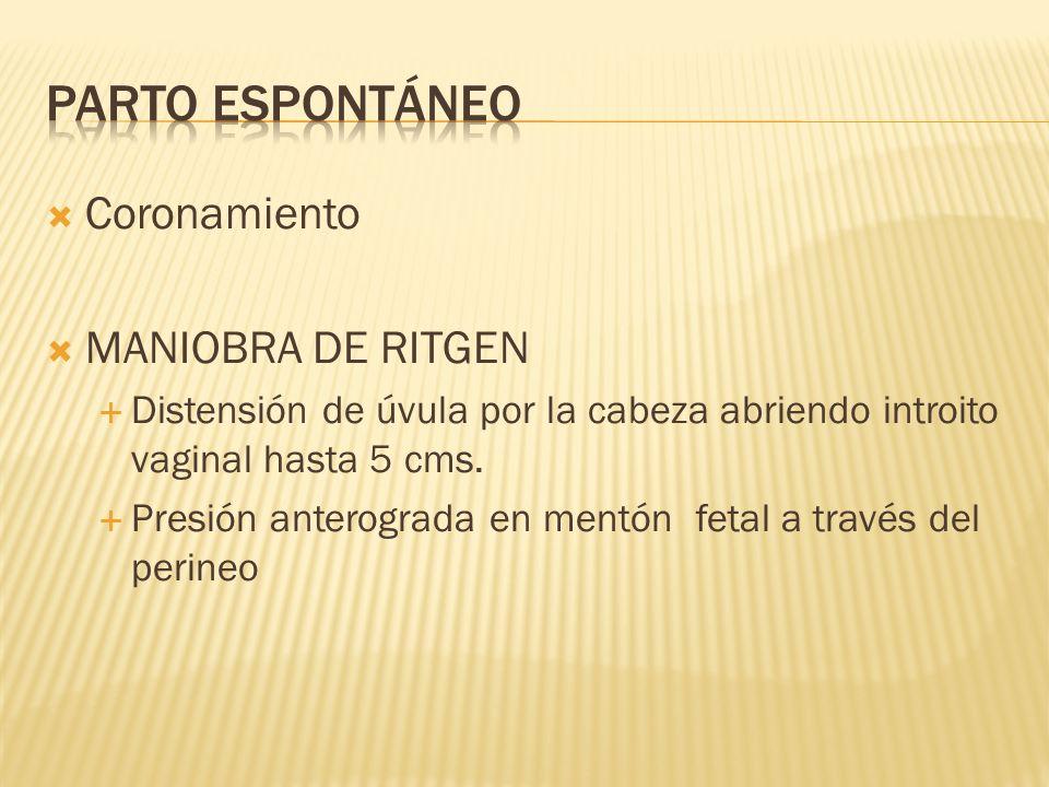 Parto espontáneo Coronamiento MANIOBRA DE RITGEN