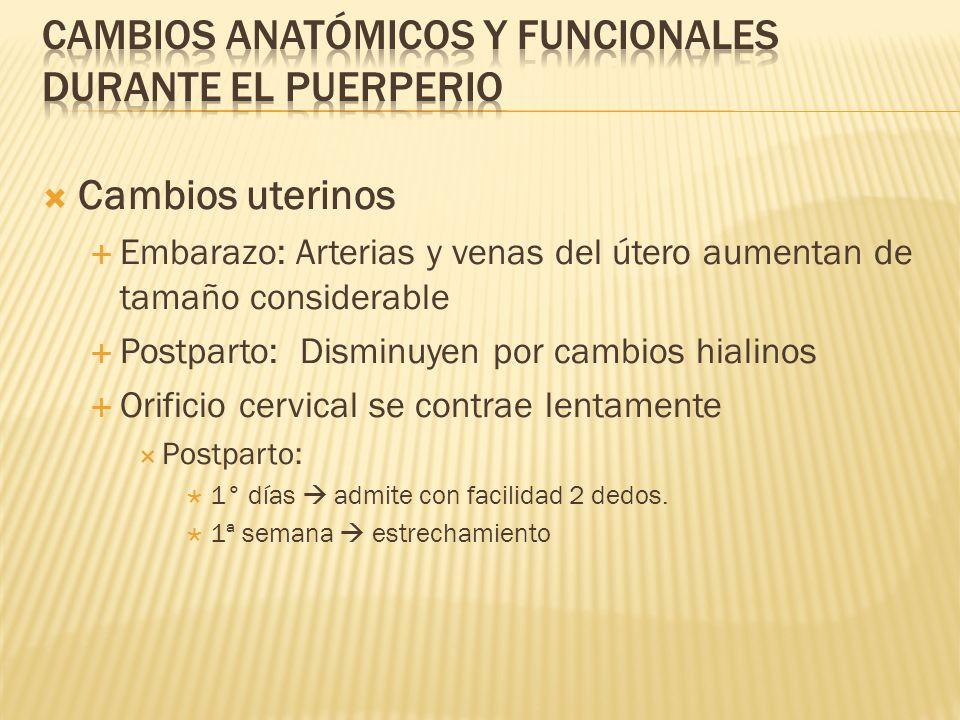 Cambios anatómicos y funcionales durante el puerperio