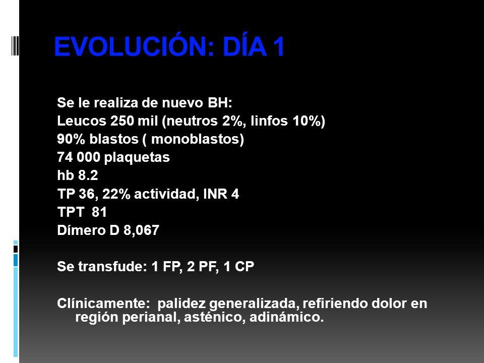 EVOLUCIÓN: DÍA 1