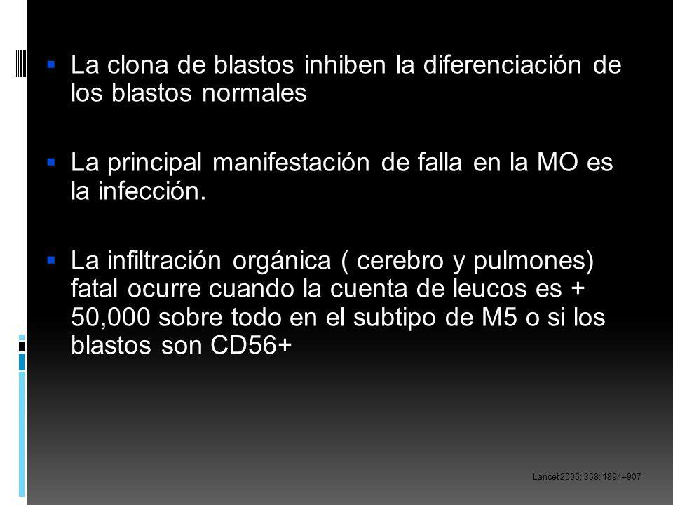 La clona de blastos inhiben la diferenciación de los blastos normales