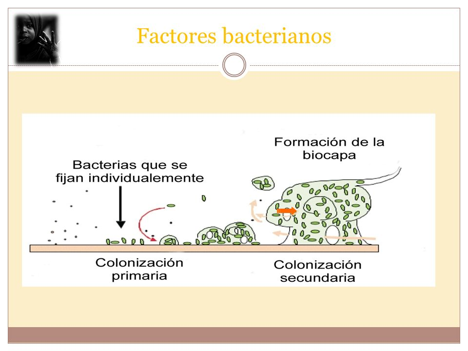 Factores bacterianos