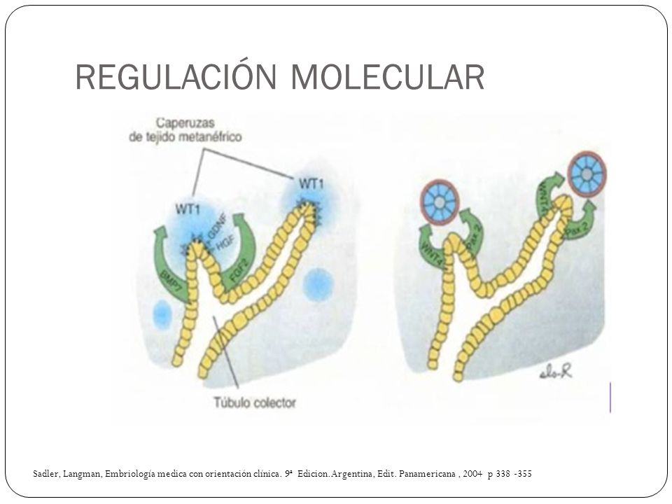 REGULACIÓN MOLECULAR