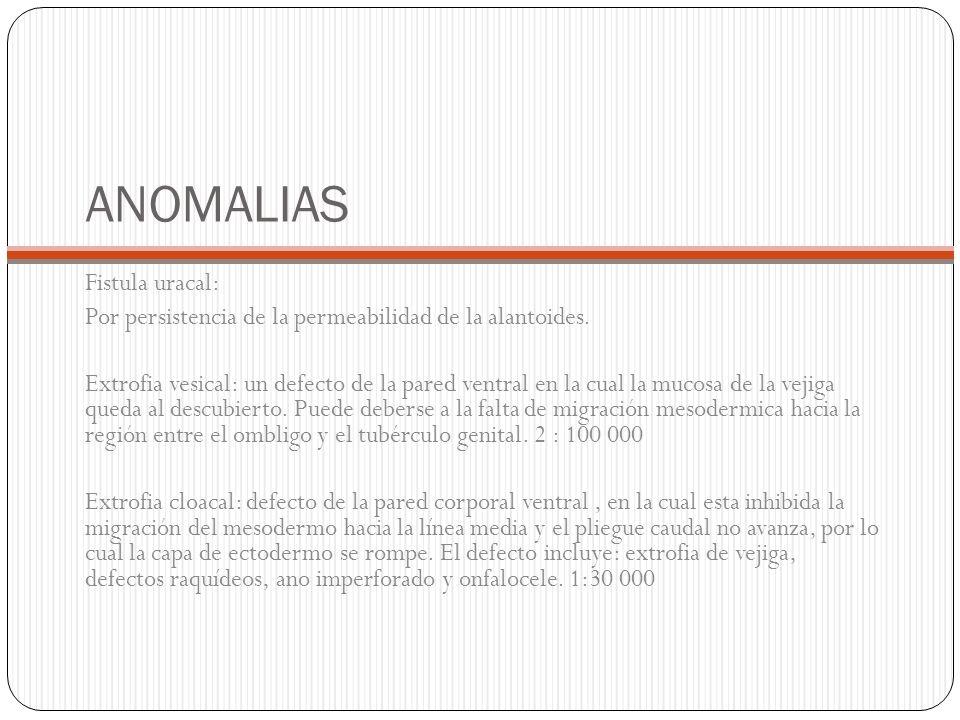 ANOMALIAS Fistula uracal: