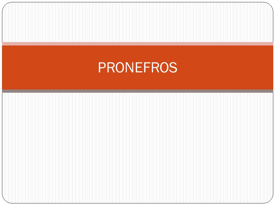PRONEFROS