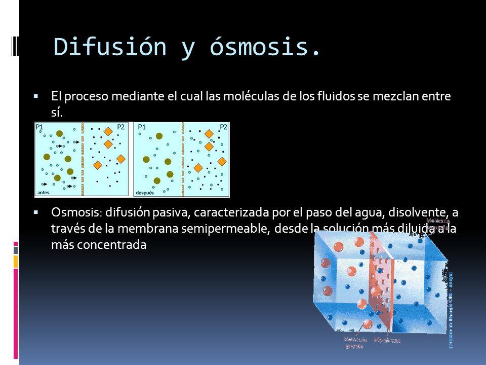 Difusión y ósmosis.El proceso mediante el cual las moléculas de los fluidos se mezclan entre sí.