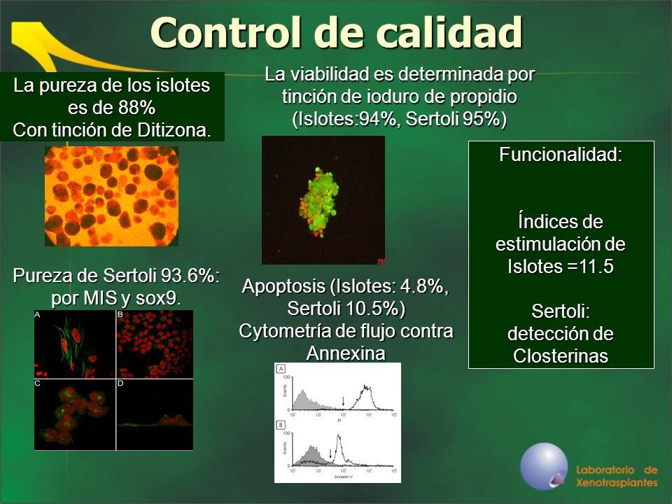 Control de calidadLa viabilidad es determinada por tinción de ioduro de propidio (Islotes:94%, Sertoli 95%)