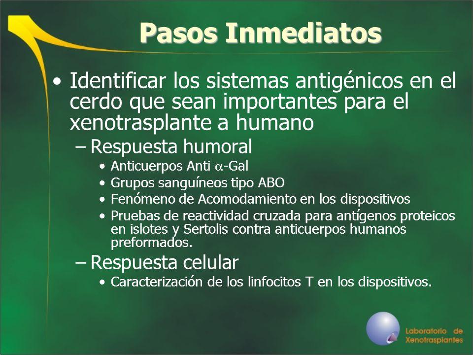 Pasos InmediatosIdentificar los sistemas antigénicos en el cerdo que sean importantes para el xenotrasplante a humano.