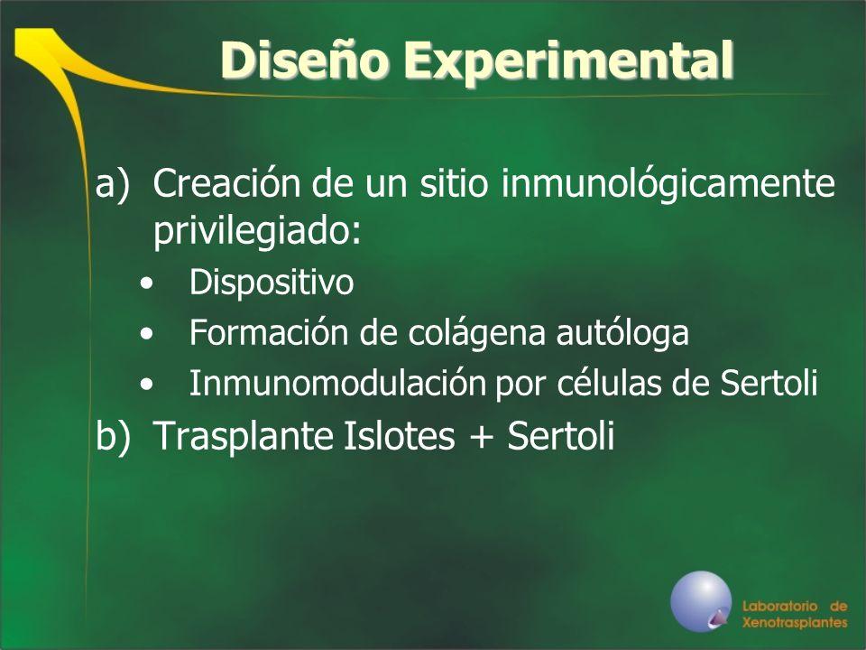Diseño ExperimentalCreación de un sitio inmunológicamente privilegiado: Dispositivo. Formación de colágena autóloga.