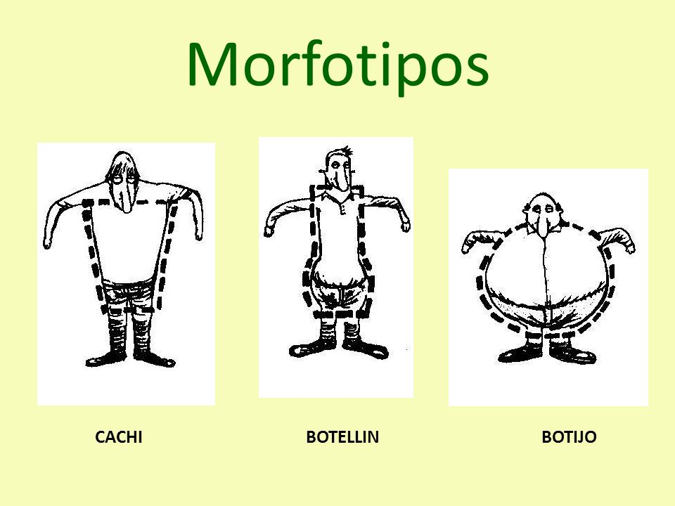 Morfotipos CACHI BOTELLIN BOTIJO