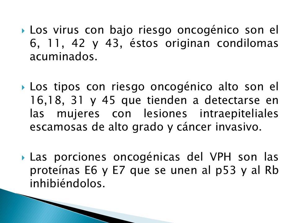 Los virus con bajo riesgo oncogénico son el 6, 11, 42 y 43, éstos originan condilomas acuminados.