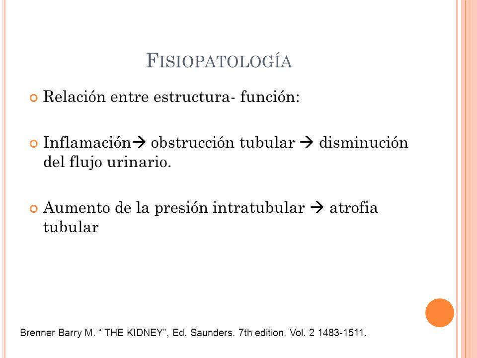 Fisiopatología Relación entre estructura- función: