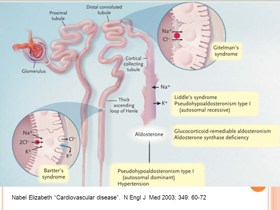 Nabel Elizabeth Cardiovascular disease . N Engl J Med 2003; 349: 60-72