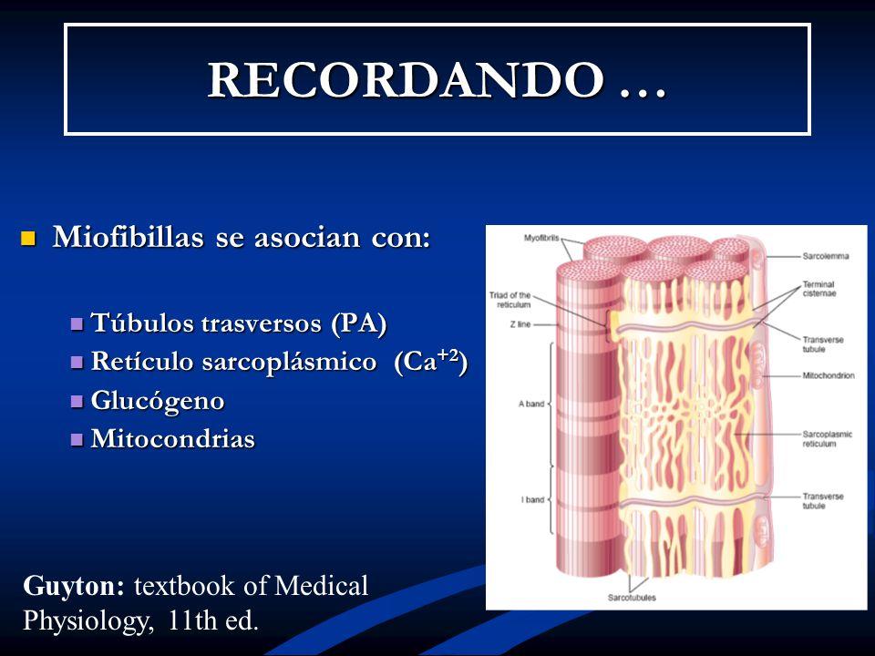 RECORDANDO … Miofibillas se asocian con: Túbulos trasversos (PA)