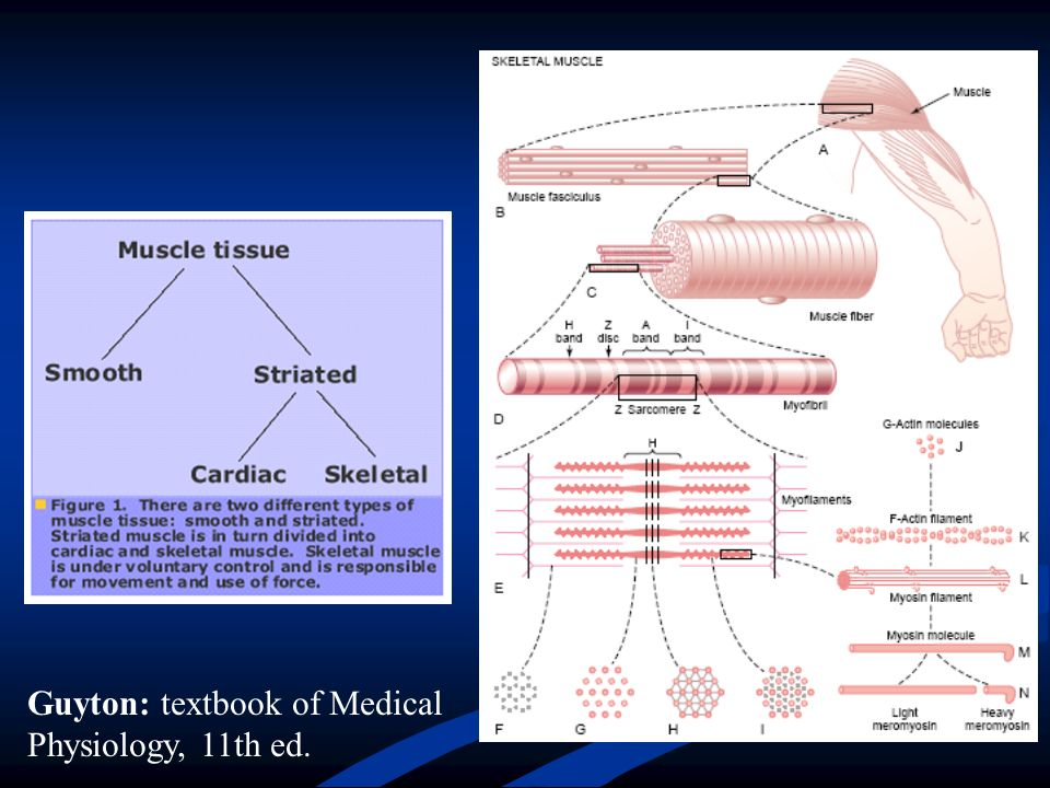 Guyton: textbook of Medical Physiology, 11th ed.