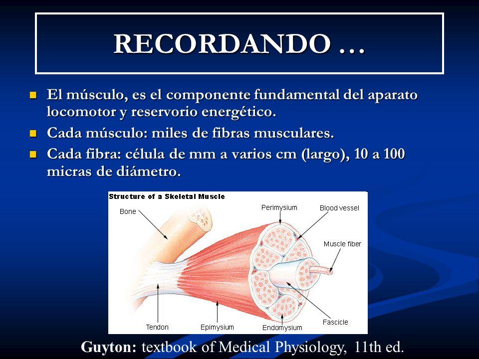 RECORDANDO … El músculo, es el componente fundamental del aparato locomotor y reservorio energético.