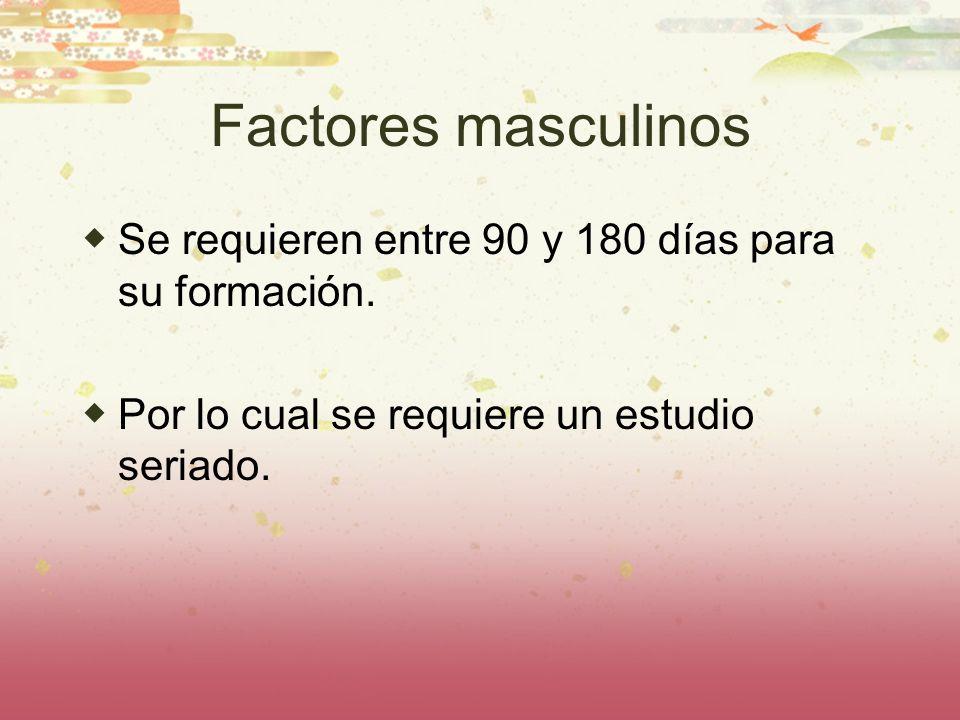 Factores masculinos Se requieren entre 90 y 180 días para su formación.