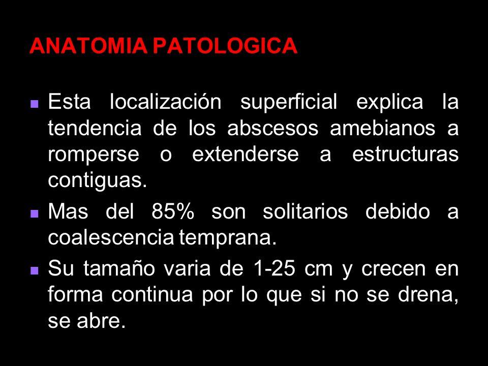 ANATOMIA PATOLOGICAEsta localización superficial explica la tendencia de los abscesos amebianos a romperse o extenderse a estructuras contiguas.