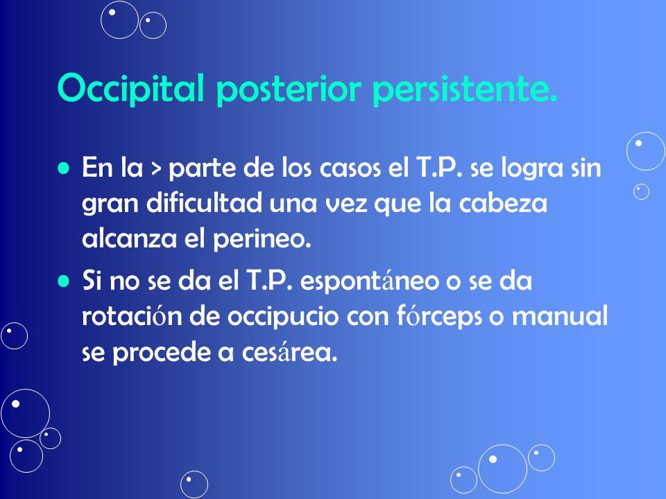 Occipital posterior persistente.