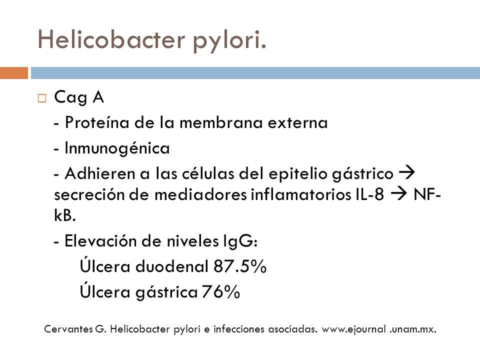 Helicobacter pylori. Cag A - Proteína de la membrana externa